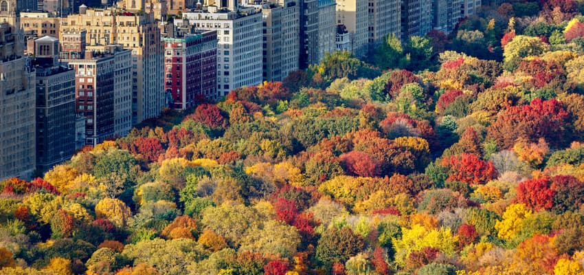 aerial view of fall trees in central park nyc